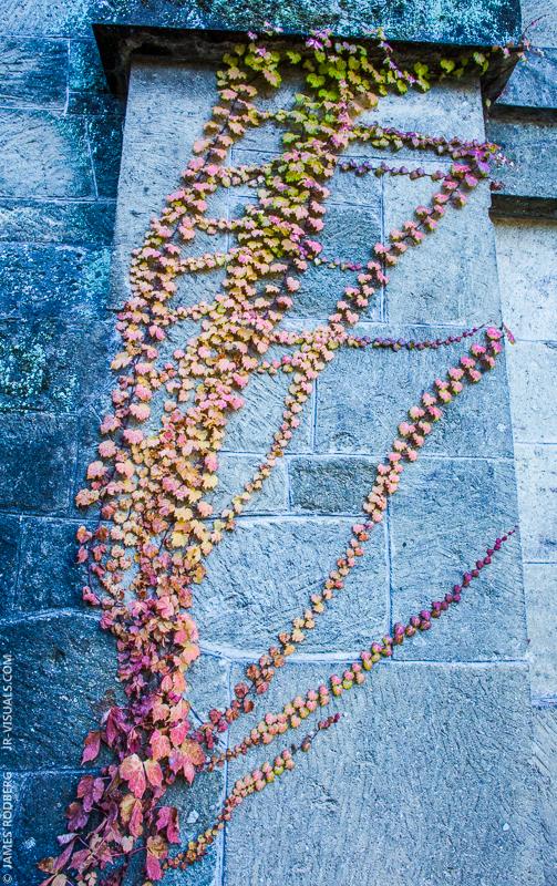 fall-vine-wall_9844