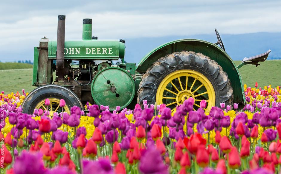 tulip-field-tractor_0356-e