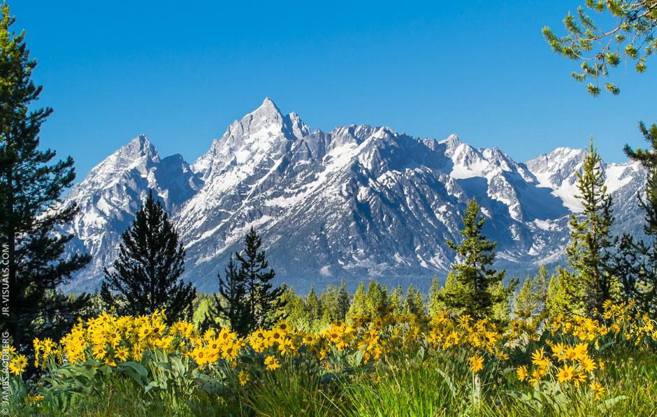 grand-teton-national-park-mountain-range-flowers_5655