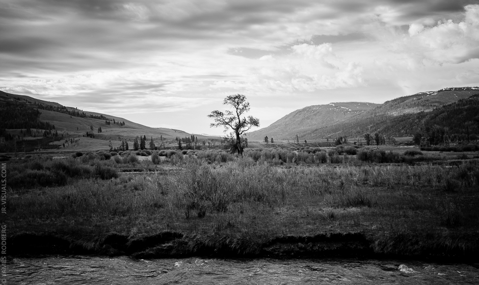 valley-lone-tree-bw_3015