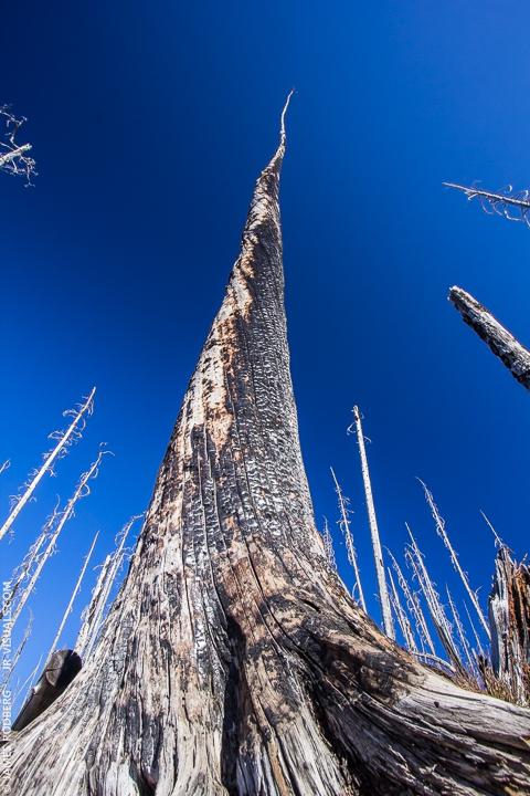 waldo-lake-forest-fire-trees_6819