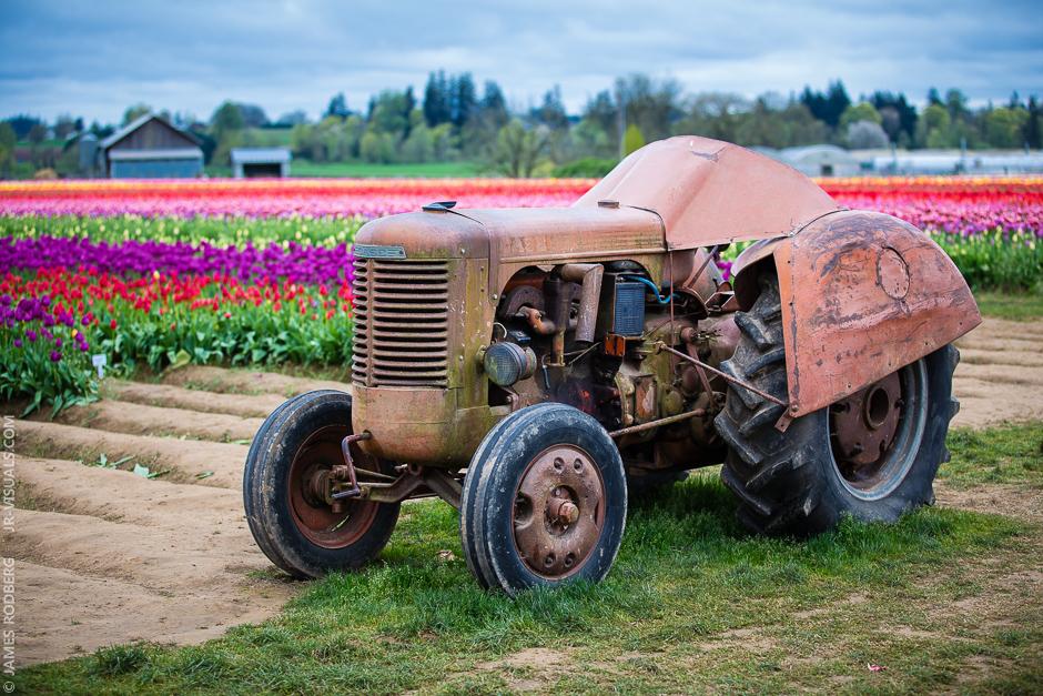 tulip-field-tractor_0311