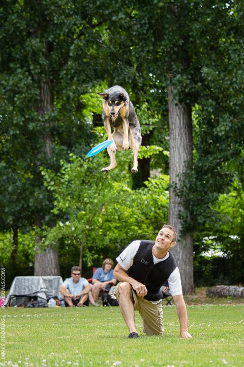 dog-frisbie-jump_5156