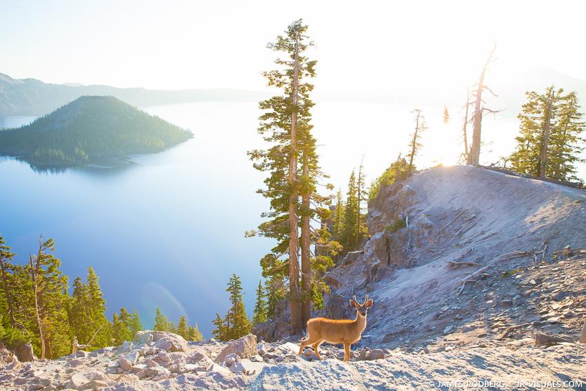 Crater-Lake-Deer-Sunrise_0654-james-rodberg-photography.jpg