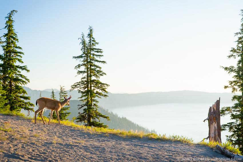Crater-Lake-Deer-Sunrise_0681-james-rodberg-photography.jpg