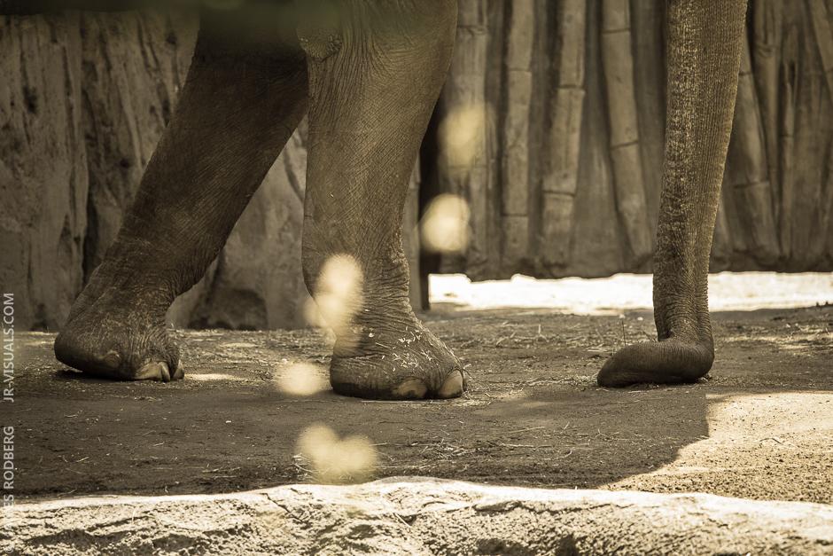 elephant-legs-trunk_4932