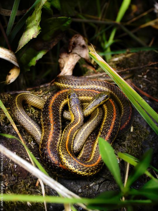 snake-cuddle_9022_c02