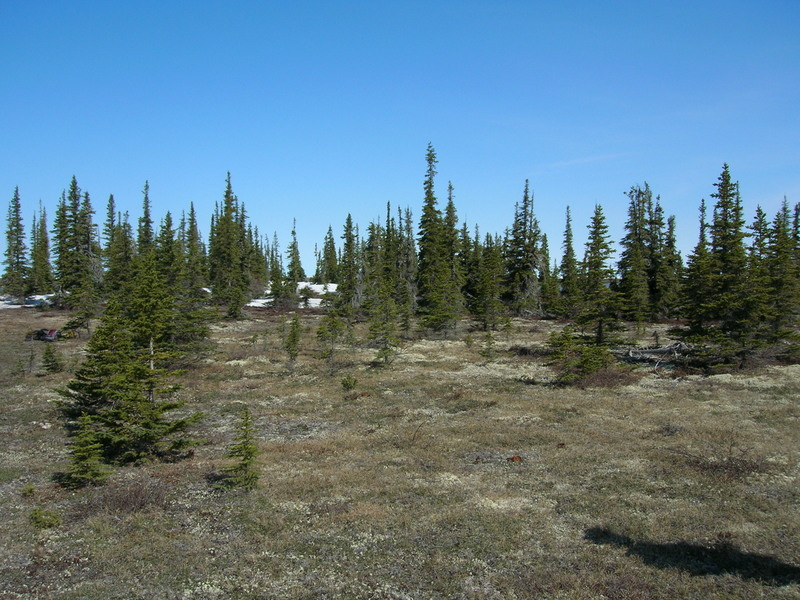 Latitudinal treeline, Churchill, Manitoba