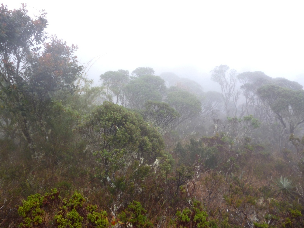 Upper treeline.JPG