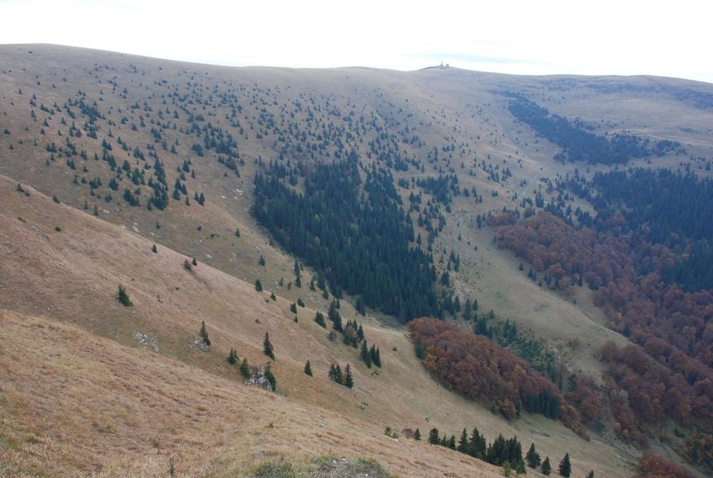 Fragmented treeline