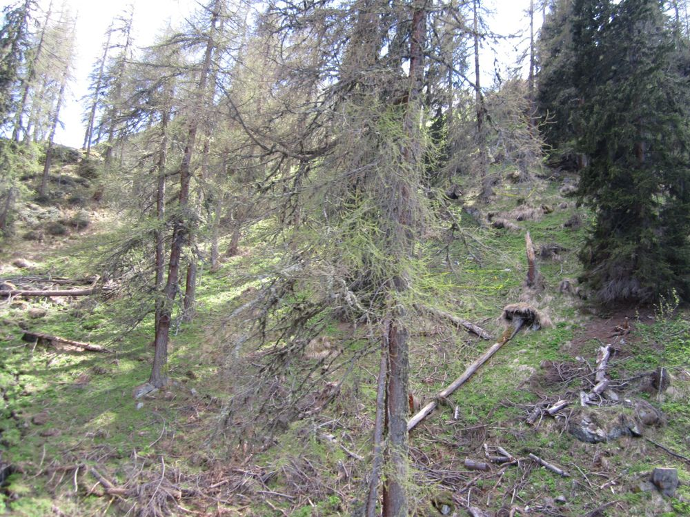 Forest Site – Swiss G-TREE experiment    Photo credit: E.R. Frei