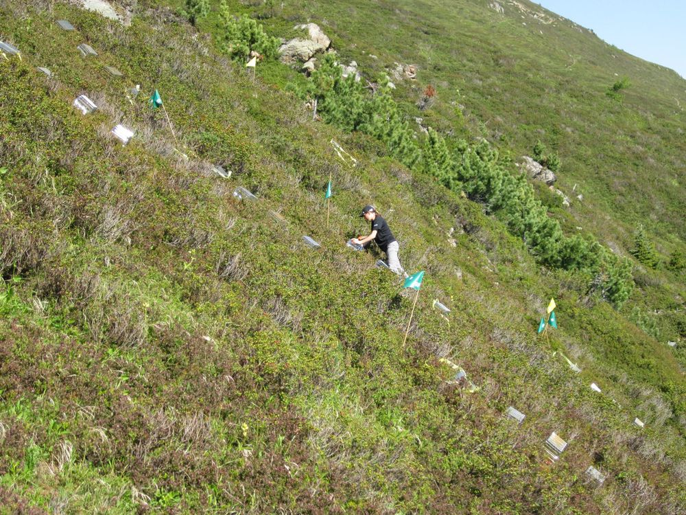 Treeline Site – Swiss G-TREE experiment    Photo credit: E.R. Frei