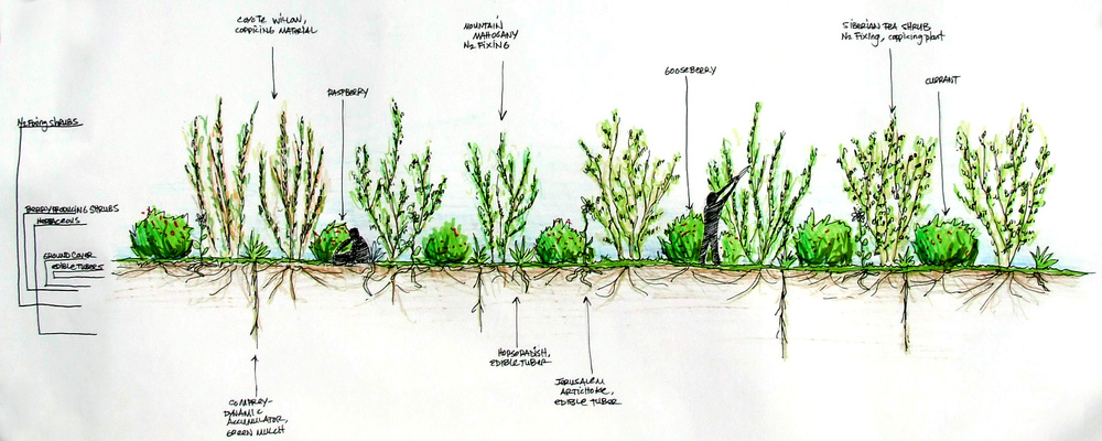Daniel Aragon ForestGardenDesign.JPG