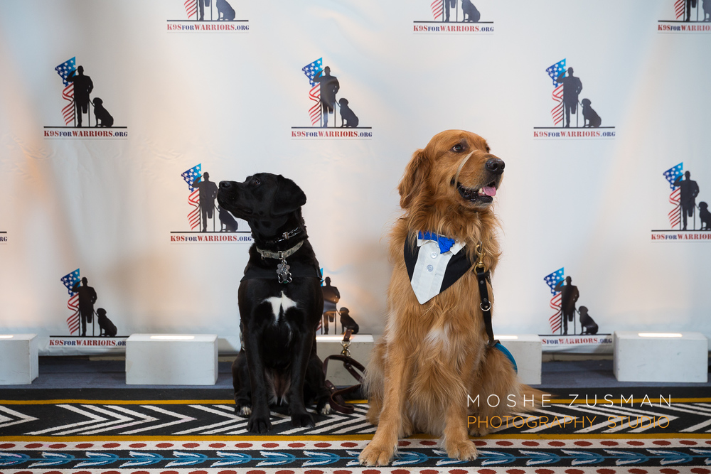 Event Photography K9 for warriors gala 2014 moshe zusman Studio DC-10.jpg