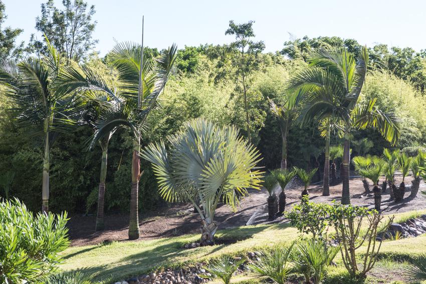 Arbres&Bambous.Cr-Sife.ElAmine-141652.jpg