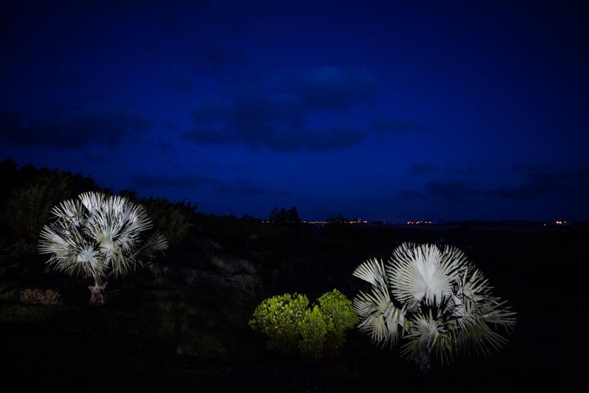 Arbres&Bambous.Nuit.Cr-Sife.ElAmine-141688.jpg
