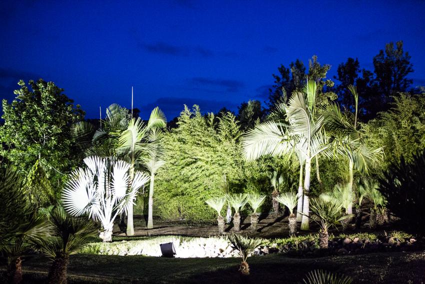 Arbres&Bambous.Nuit.Cr-Sife.ElAmine-141691.jpg