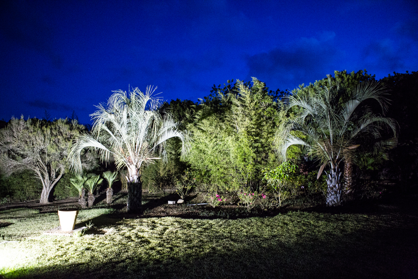 Arbres&Bambous.Nuit.Cr-Sife.ElAmine-141694.jpg