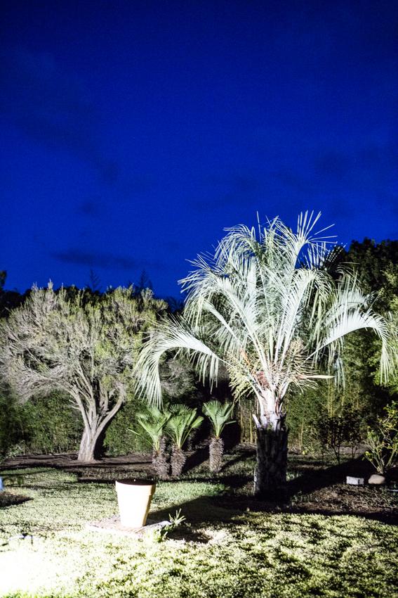 Arbres&Bambous.Nuit.Cr-Sife.ElAmine-141695.jpg