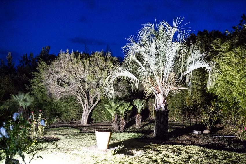 Arbres&Bambous.Nuit.Cr-Sife.ElAmine-141696.jpg