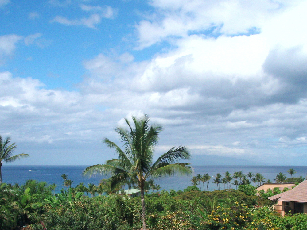 View with Vegetation and Lanai.jpg