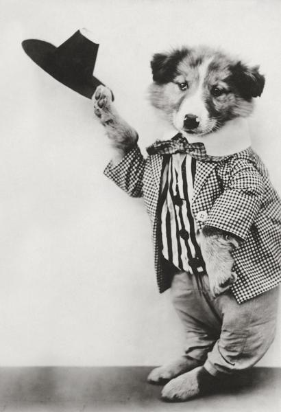doggydancing3.jpg