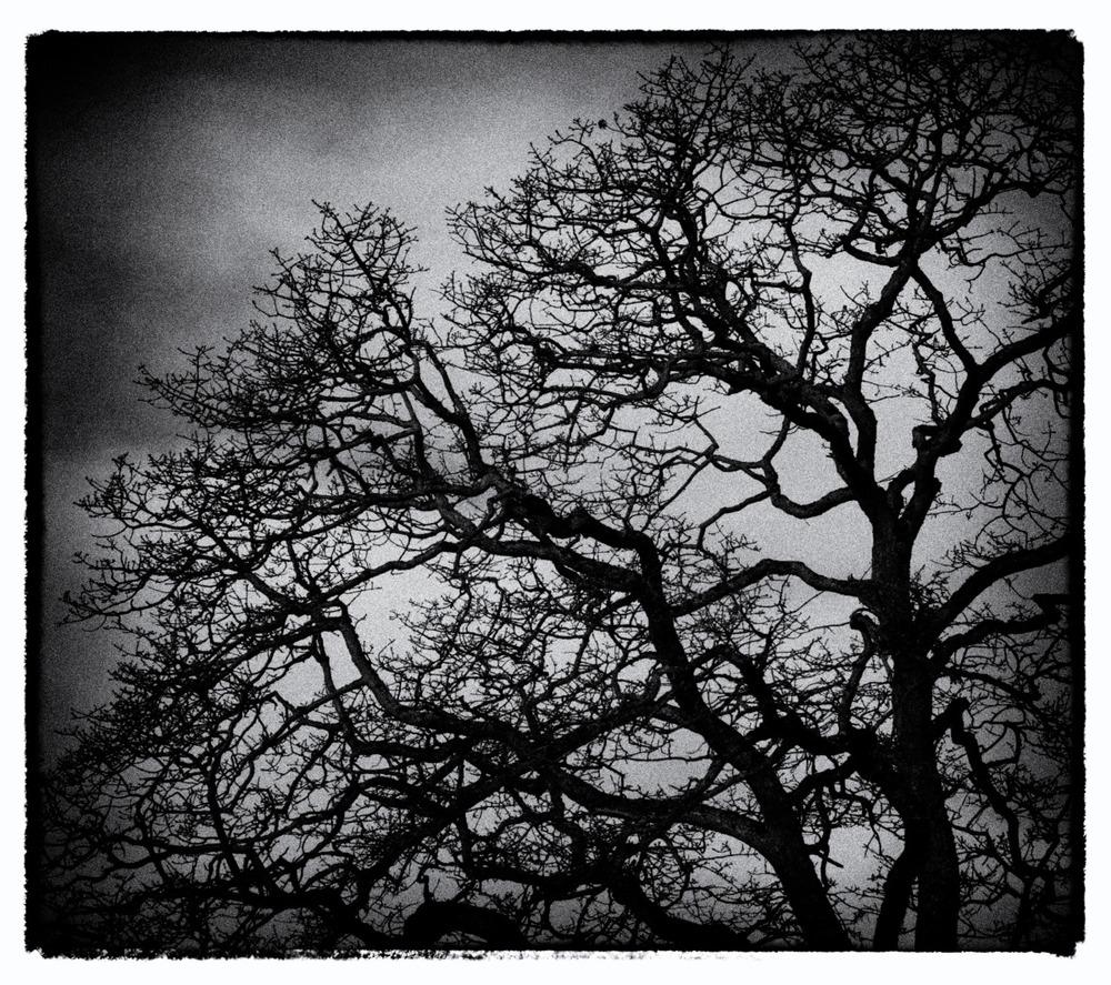 2012-02-05 at 08-51-14 bare branches looking up scarey threatening trees winter.jpg