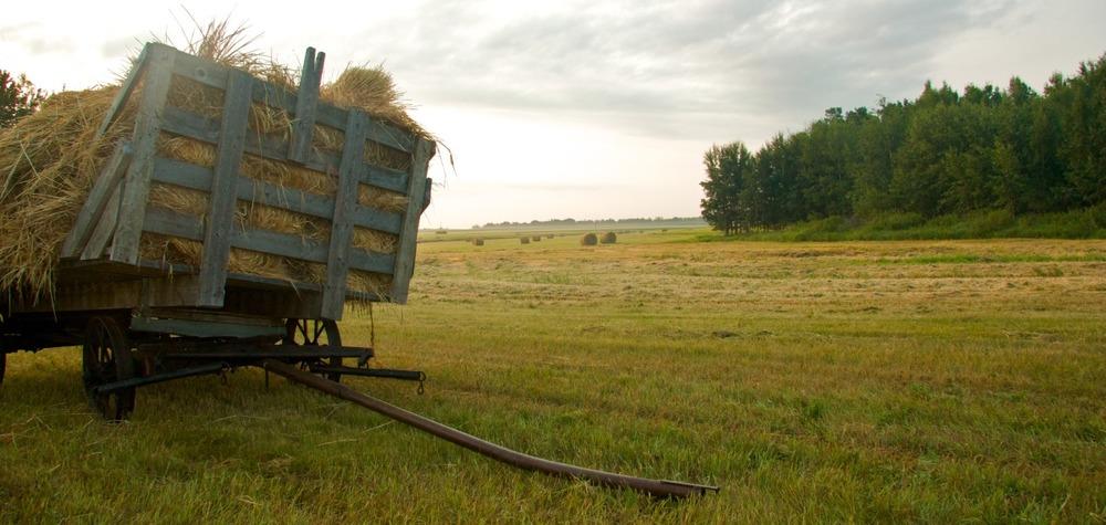 2009-08-01 at 18-03-54 field, harvest, hay rack, haying, praires, saskatchewan.jpg
