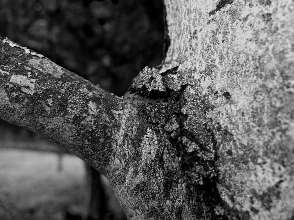 2012-10-20 at 08-25-21 bark black  white branch nature trees.jpg