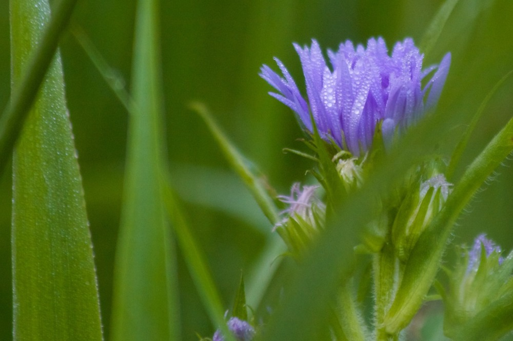 2009-08-01 at 18-58-34 depth dreamy flower grass green purple soft.jpg