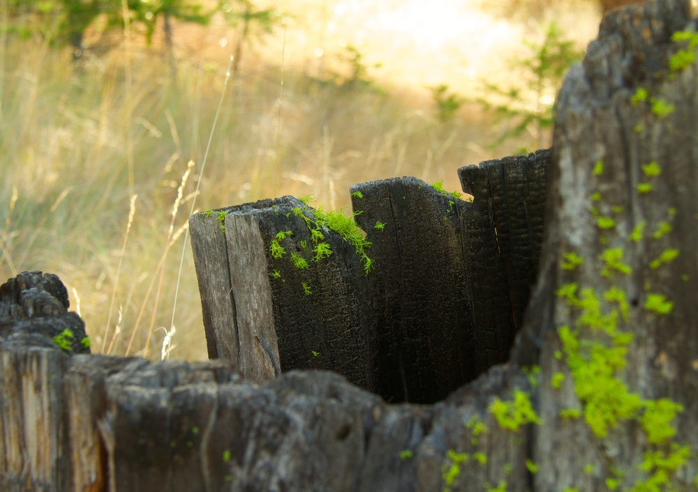 Brilliant green moss on a blackened tree stump.  Canon EOS 7D EF-S 17-85mm at 47mm f/5.6 1/60 ISO 160 −1ev