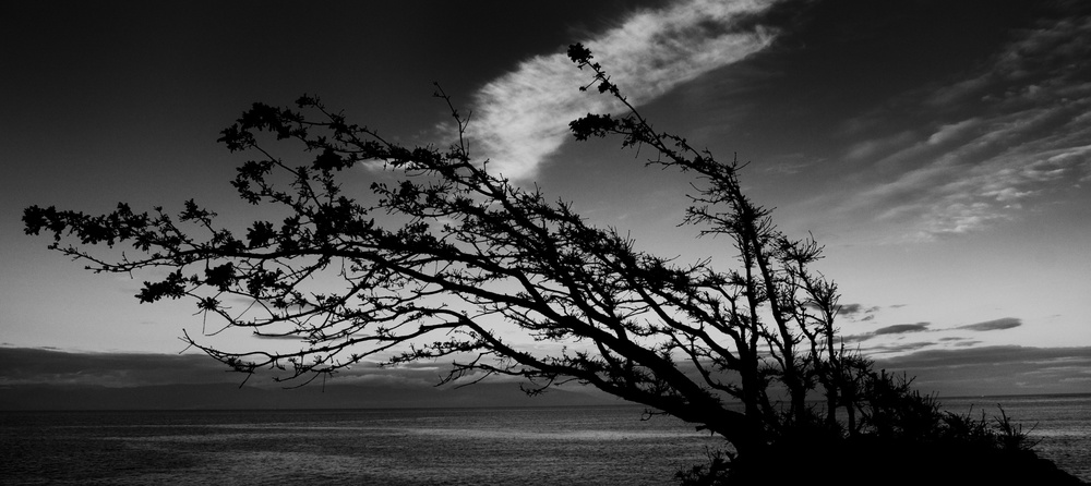 A tree leans sideways into the wind.  Canon EOS XSi EF-S 17-85mm at 20mm f/8 1/250 ISO 200 −1ev