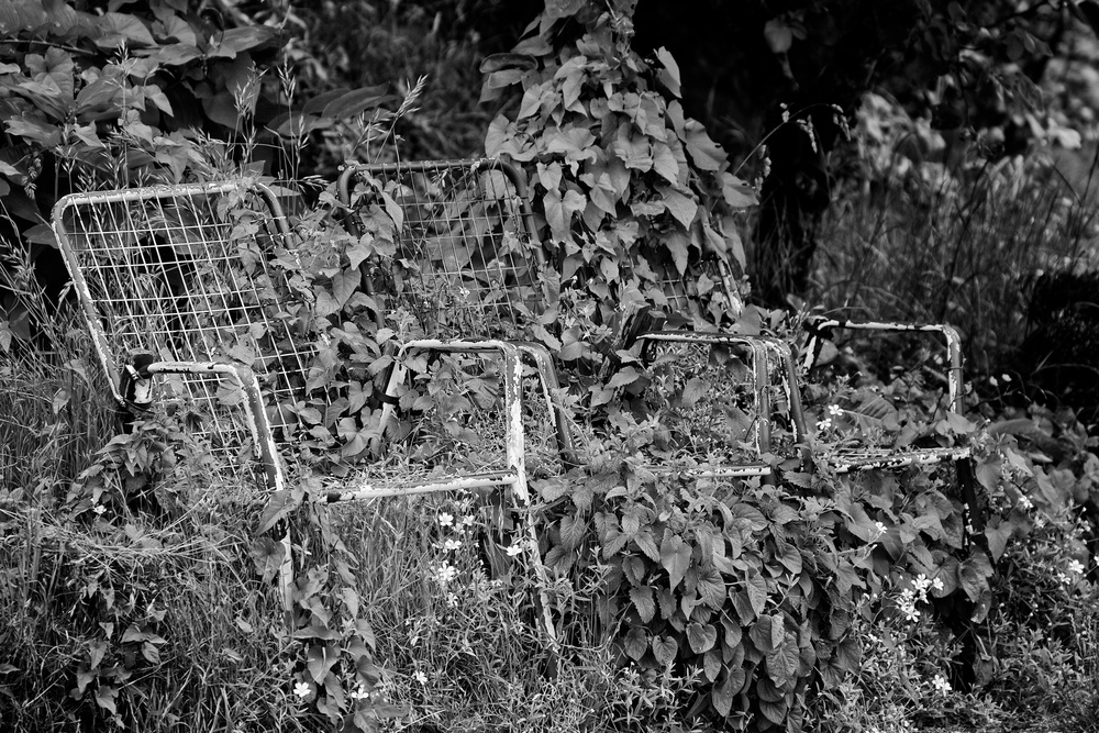 2013-06-08 at 10-54-30 Black & White, Ivy, Jungle, Lawn Chair, Still Life, Street Life.jpg