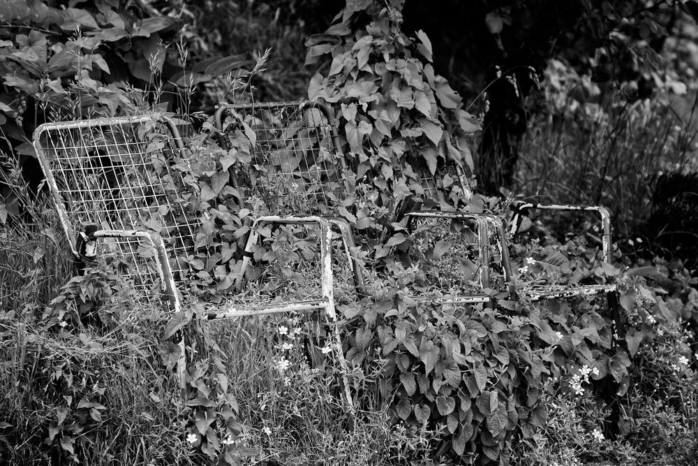 2013-06-08 at 10-54-30 Black & White, Ivy, Jungle, Lawn Chair, Still Life, Street Life.jpg
