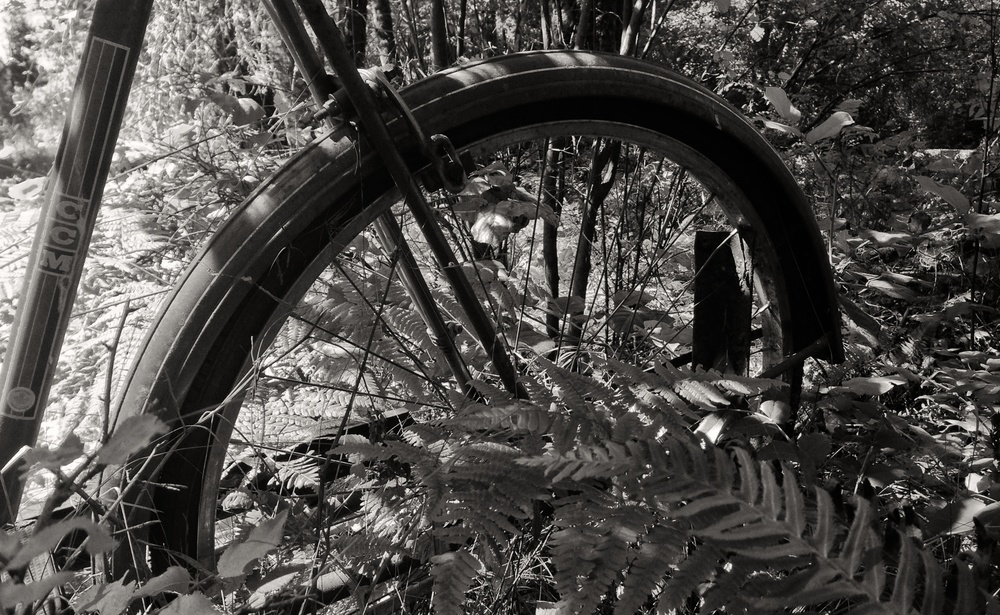 IMG_1805 Bike, CCM, Overgrown, Forest, Ferns, Black & White.jpg