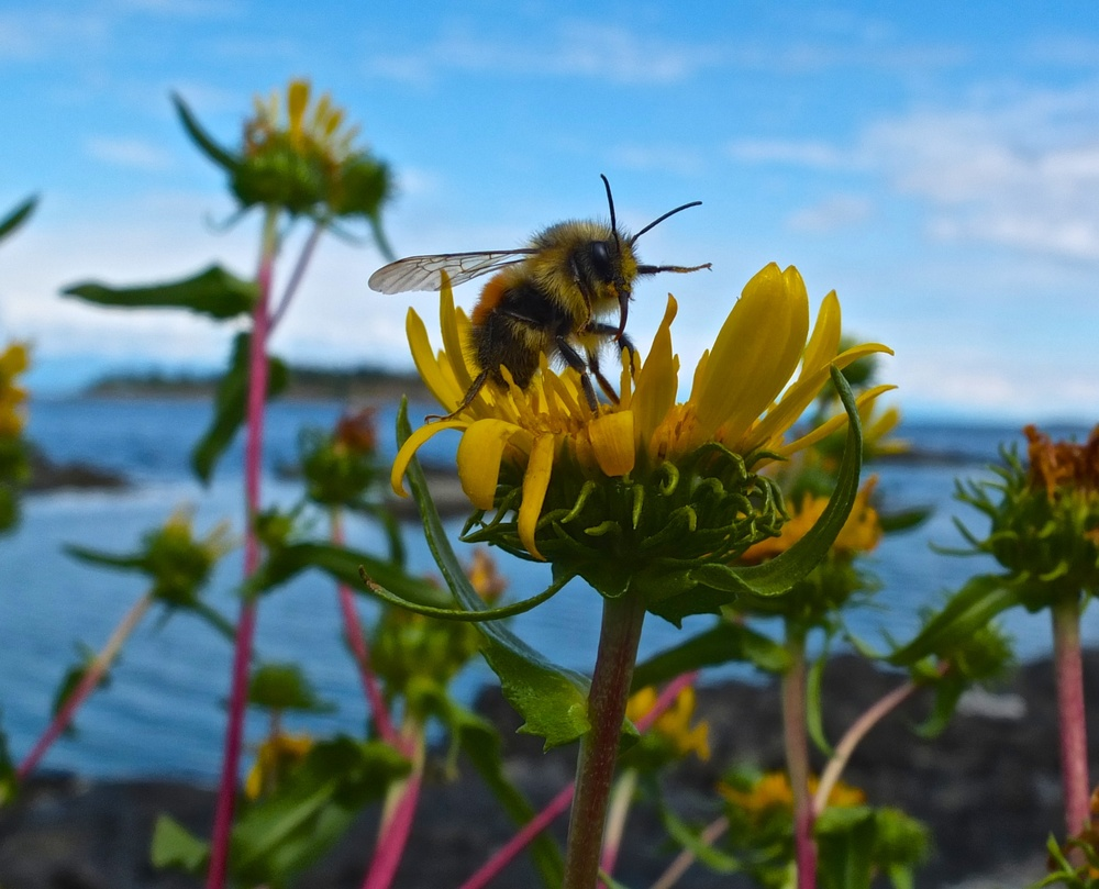 A bee watches me carefully as he gathers food.  Fuji X10 28-112mm at 28mm f/5 1/300 ISO 200