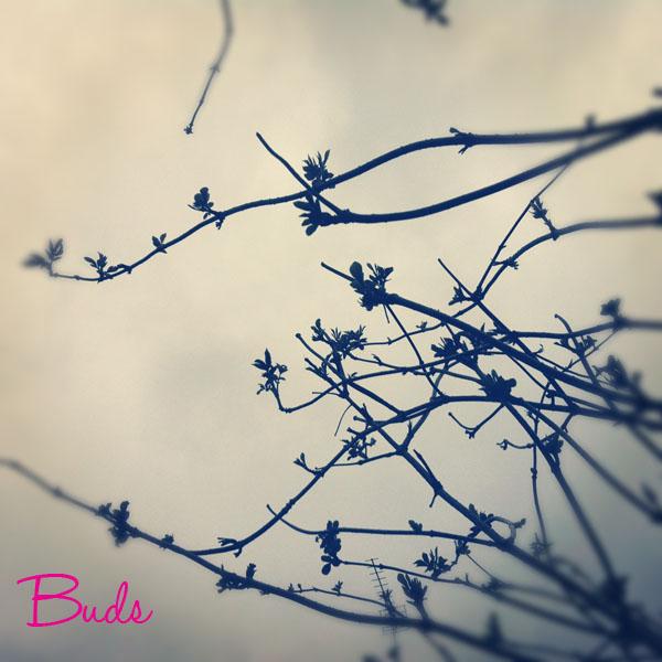 Photo(123)