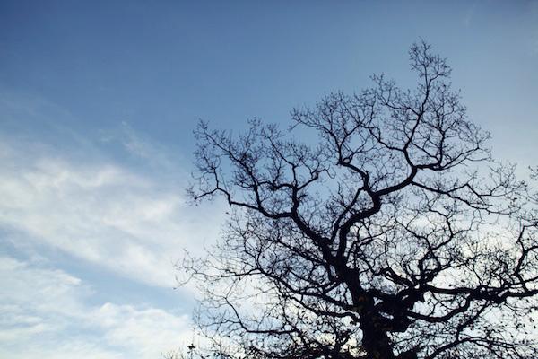 Winter 001