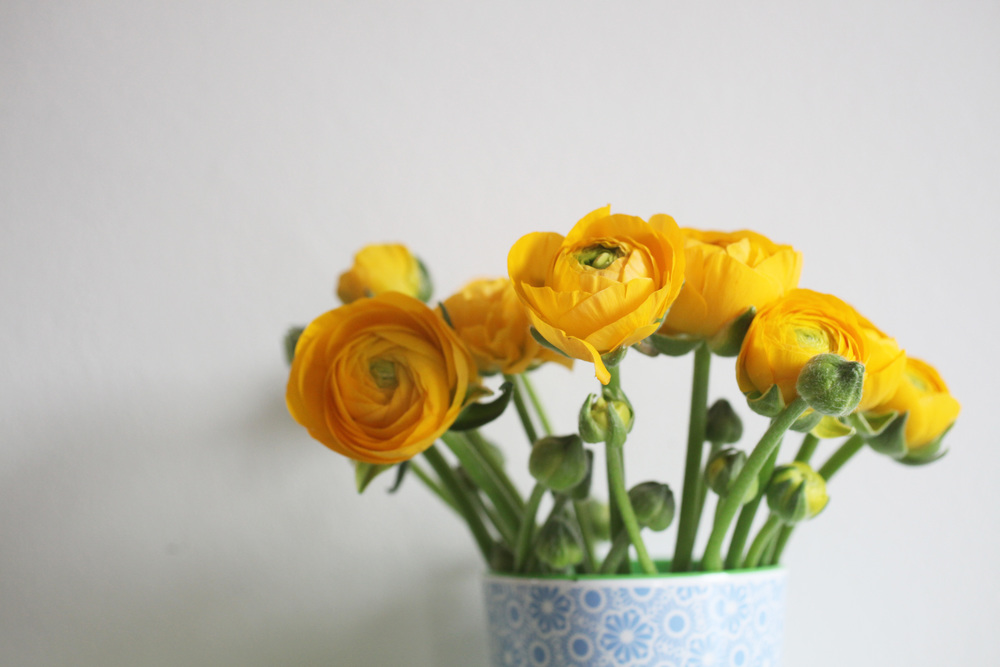 yellowranunculus 019.jpg