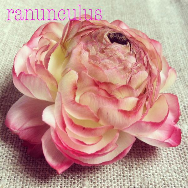 pinkranunculus.jpg