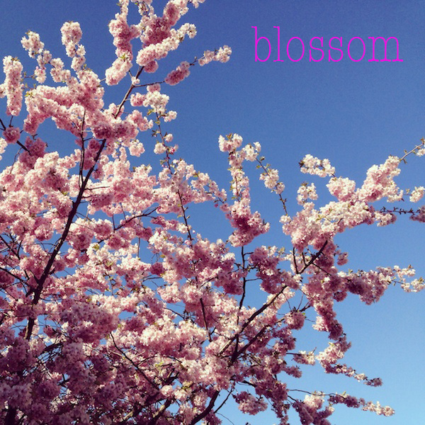 blossom04.jpg