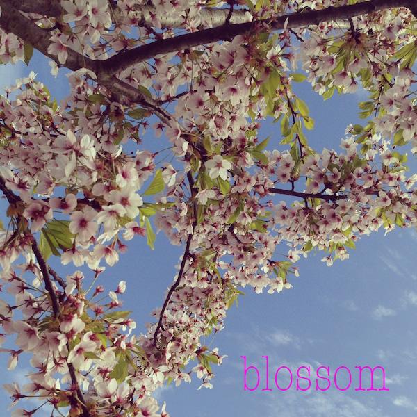blossom05.jpg