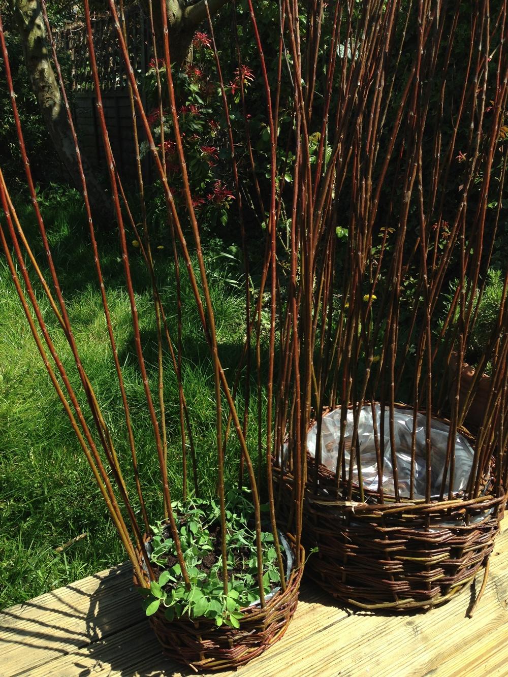 garden 030.jpg