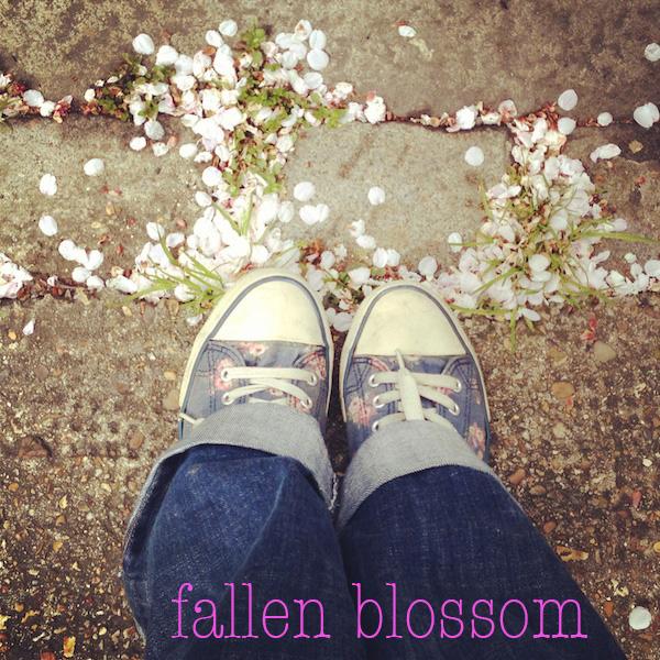 fallenblossom.jpg