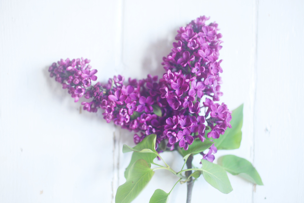 floralfriday 009.jpg