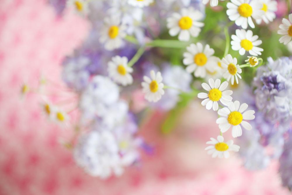 floralfriday 006.jpg