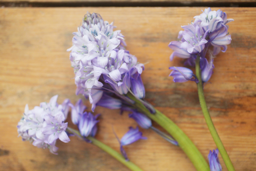 floralfriday 012.jpg