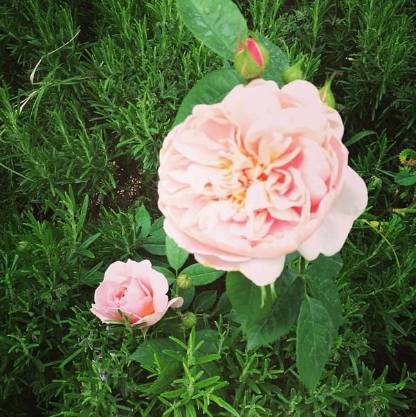 floralfriday 013.jpg