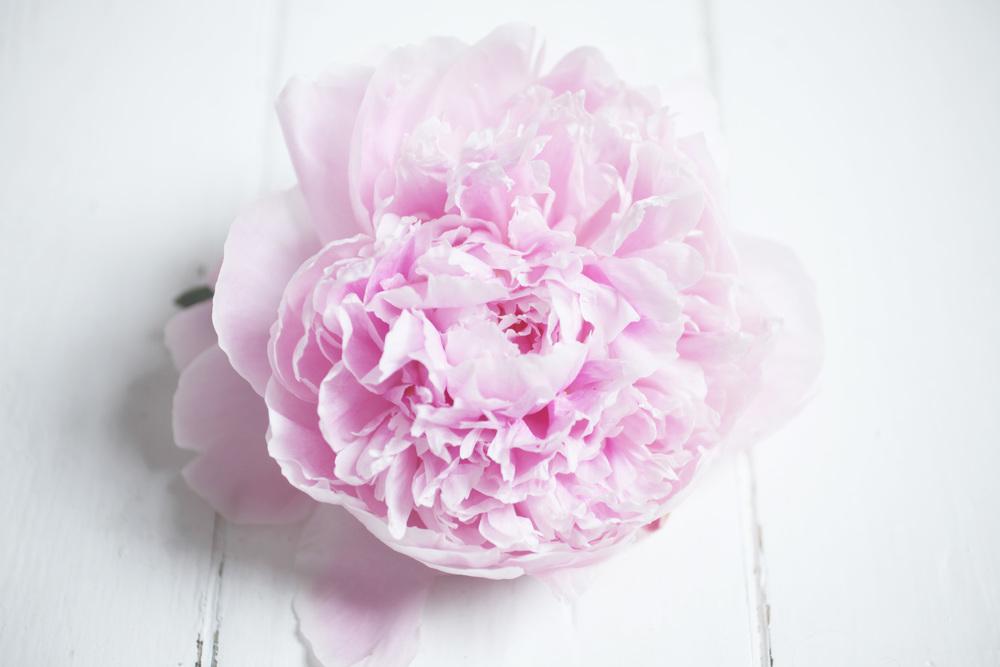 floralfriday30 042.jpg