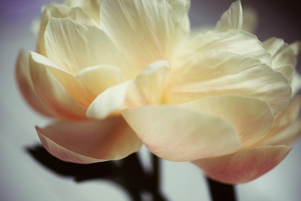 floralfriday30 048.jpg